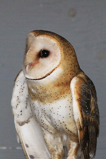 Barn Owl - Casper by Alyce Taylor