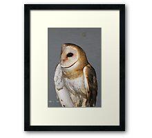 Barn Owl - Casper Framed Print