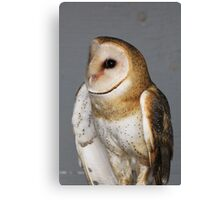 Barn Owl - Casper Canvas Print