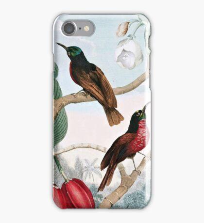 Senegal Creeper Birds iPhone Case/Skin