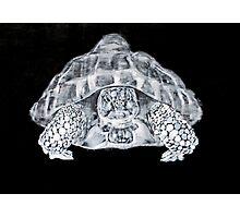 THE FIERY SPIRIT #turtle Photographic Print