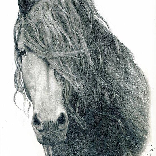 Disegni di cavalli a matita imagui for Disegni di cavalli a matita