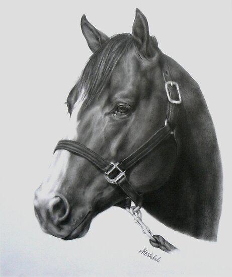 Quarter Horse Head Drawing 10 animaleschi ...