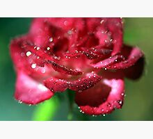 Diamond Rose Photographic Print by Stephen Mitchell
