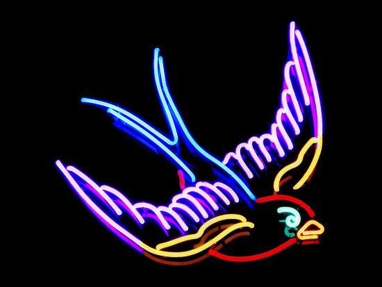 black and neon backgrounds. Bird in Neon by Karin Lau