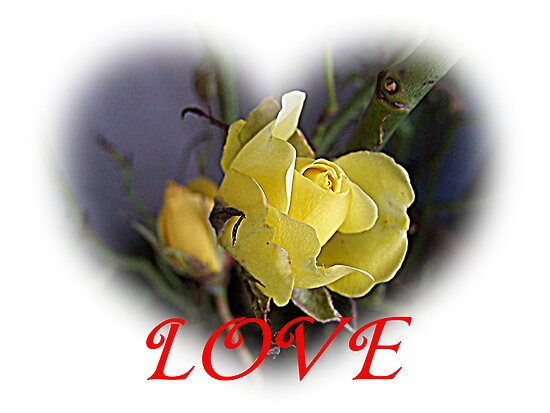 Love Heart For Valentine. Yellow Rose Love Heart
