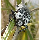 Black and White Beetle by taiche