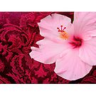 Burgundy and Hibiscus by angeloaguinaldo