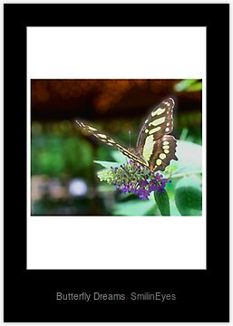 Butterfly Dreams Laminated Print