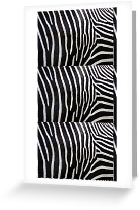 black and white patterns to print. lines, patterns, lack and white, zebra and zoo, richimage and zebra