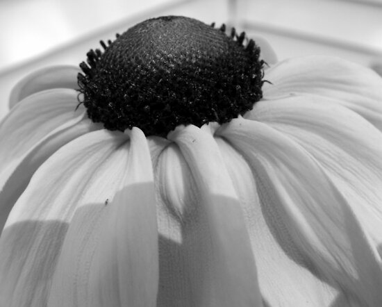 flowers pictures black and white. lack and white pictures of