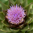 Blossoming Artichoke - Los Angeles, California by April Rocha
