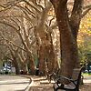 'Belmore Park, Central' Top Ten in TREES..... BEAUTIFUL CREATIVE TREES challenge Streets With Trees In A Row