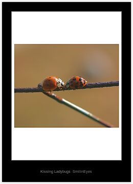Kissing Ladybugs Laminated Print