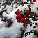 Lumi by HiljaisenArt