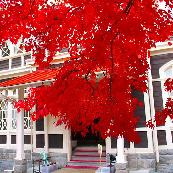 japanese maple tree meaning. japanese maple tree meaning.