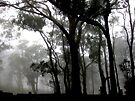 Gumtrees in the park, Picnic Point, Toowoomba by Marilyn Baldey