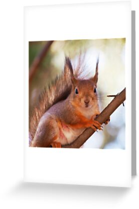 Long Eared Squirrel Long eared red squirrel,