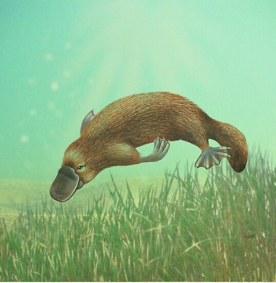 platypus life cycle young