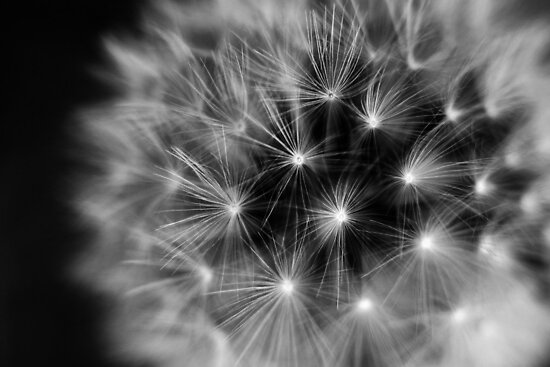 fireworks clipart black and white. fireworks clipart black and