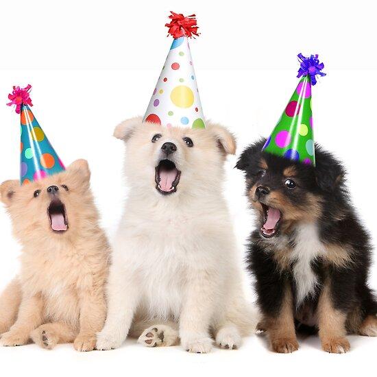http://ih1.redbubble.net/work.6100291.1.flat,550x550,075,f.puppy-dogs-singing-happy-birthday-to-you.jpg