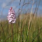 August's Photograph - Spotted Orchid