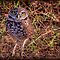 2 in '(Birds Category) - Order - Strigiformes - Owls' challenge of group 'Nature Photography C…'