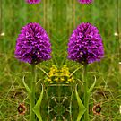 December's Photograph - Pyramidal Orchid Inishmore