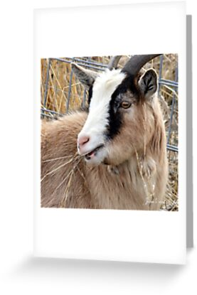 Farm Animal Pictures To Print. goat, animal, farm animal,