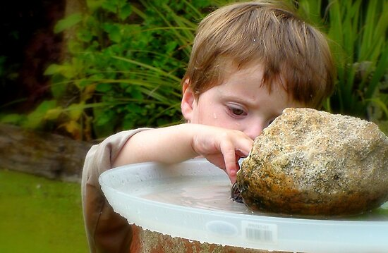 "Birdbath Maintenance! - Child Playing - NZ"" Fine Art Print by ..."