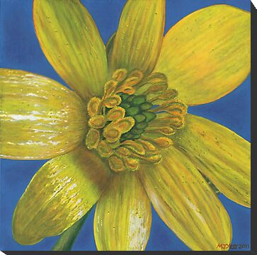 celendine botanical flower painting for sale