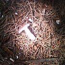 Mushroom Spotlight by lyvit