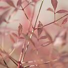 Pink Plants - Japan by Andy Solo