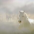 Horses Run 2