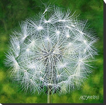 dandelion seedhead botanical flower painting for sale