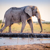 elephantbay