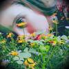 Chicorydellarts
