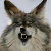 foxmusk