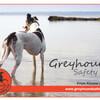 GreyhoundSN