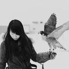 FalcoGallus