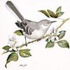 mockingbird23