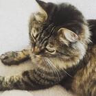 Kitten2525