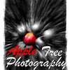Apple Tree Photography