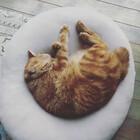 mychubbycat