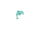 Dolphindesign