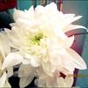 floweryfotos