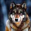 WolfAndOak