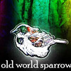 Old World Sparrow