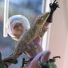 GeckoPods
