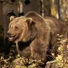 bearclan57